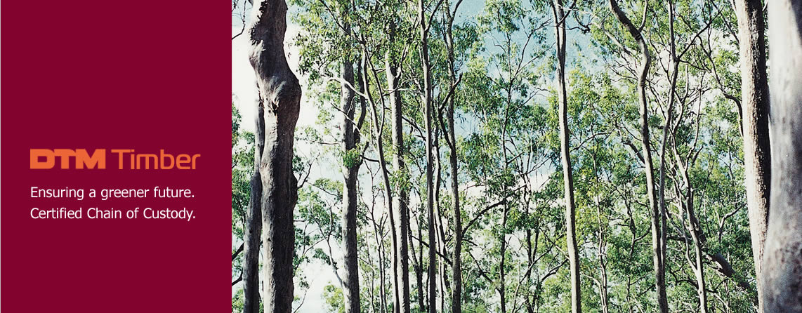 Photo of typical Australian forest used for logging